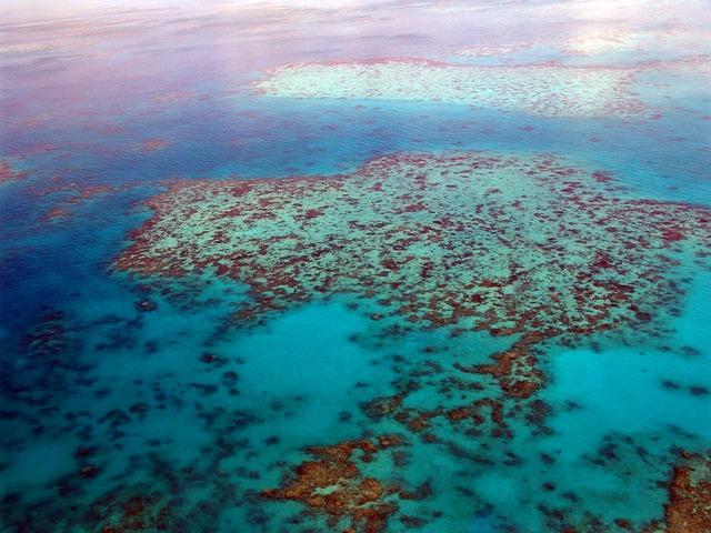 Die wunderschöne Unterwasserwelt des Great Barrier Reef entdecken