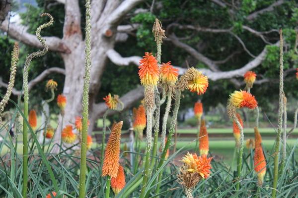 Pflanzen im Royal Botanic Garden