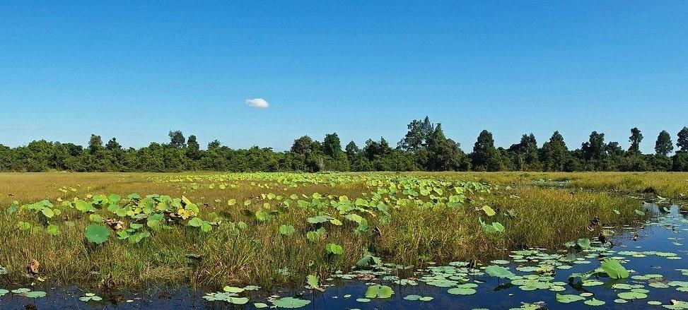 Kambodscha Natur